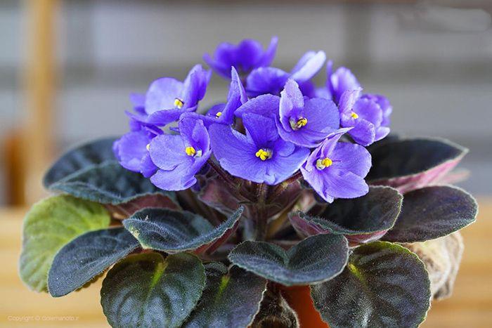 زیباترین گل های بهاری آپارتمانی + نکات نگهداری و پرورش گل و گیاه