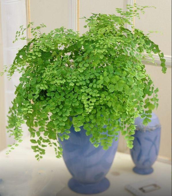 فواید نگهداری از گل و گیاه در خانه + راهکارهای کاربردی برای نگهداری صحیح