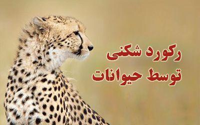 رکورد شکنی حیوانات | از سرعت یوزپلنگ تا قدرت سوسک کرگدنی