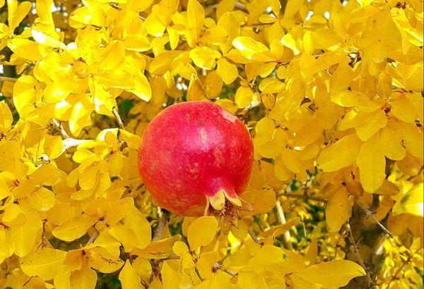 توصیه های ائمه درباره میوه ها و اهمیت تغذیه در اسلام