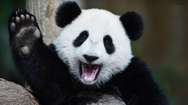 برترین موجودات قاره آسیا (از ببر بنگال تا ماکاک ژاپنی)