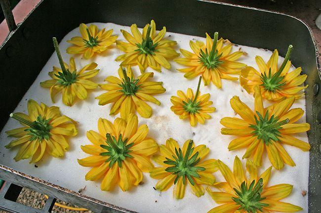 روش های خشک کردن گل طبیعی (8 روش کاربردی و آسان)