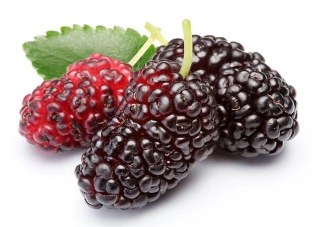 خواص توت (میوه توت و توت خشک چه فوایدی دارند؟)