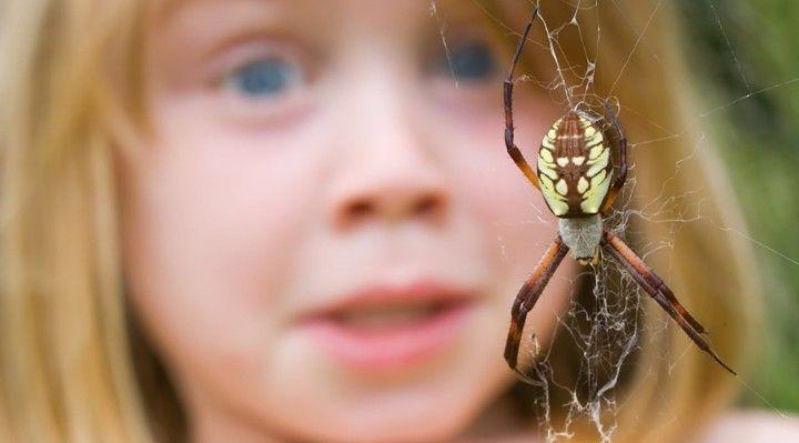 10 شایع ترین ترس های جهان | از ارتفاع تا عنکبوت و فضای بسته