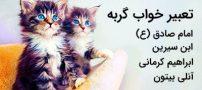 تعبیر خواب گربه | دیدن خواب گربه چه تعابیری دارد؟