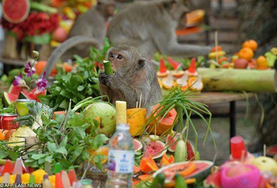 دیدنی های جالب و عجیب تایلند | از معبد دیوید بکهام تا کافه سگ ها