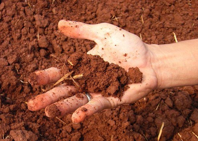 تعبیر خواب خاک   دیدن خاک در خواب چه تعابیری دارد؟