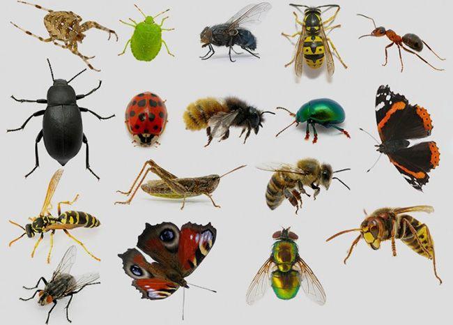 تعبیر خواب حشرات   دیدن حشرات در خواب چه تعابیری دارد؟