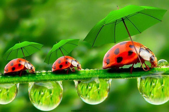 تعبیر خواب حشرات | دیدن حشرات در خواب چه تعابیری دارد؟