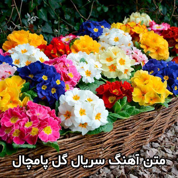 عکس و اسامی بازیگران سریال گل پامچال + زمان پخش و خلاصه داستان
