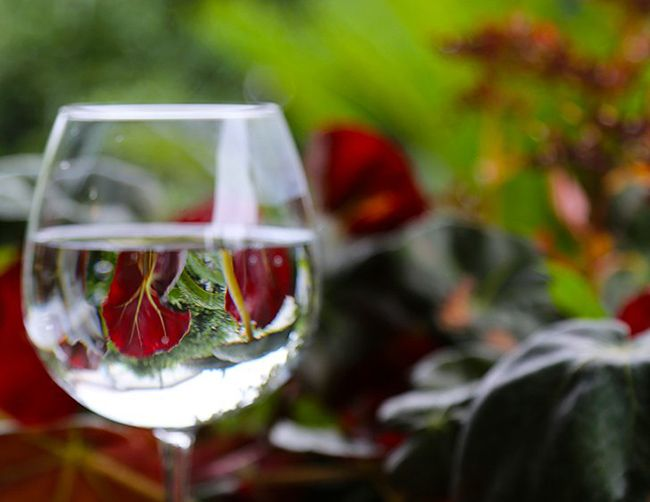 معرفی 10 بهترین گیاهان آپارتمانی سایه دوست و مقاوم