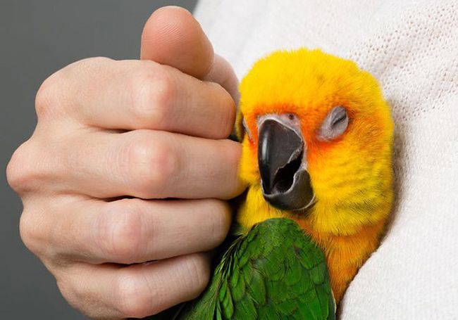 تعبیر خواب پرنده | دیدن پرندگان در خواب چه تعابیری دارد؟