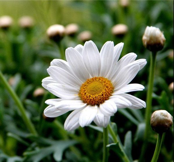 برای همسرمان چه گلی بخریم و چگونه گل هدیه بدهیم؟