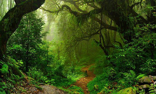 تعبیر خواب جنگل | دیدن خواب بیشه و جنگل چه تعابیری دارد؟