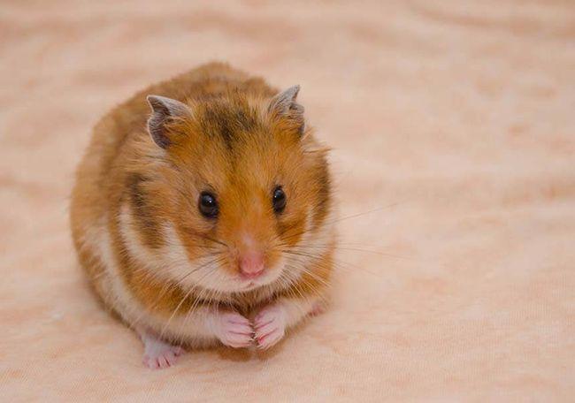 تعبیر خواب موش | دیدن موش در خواب چه تعابیری دارد؟