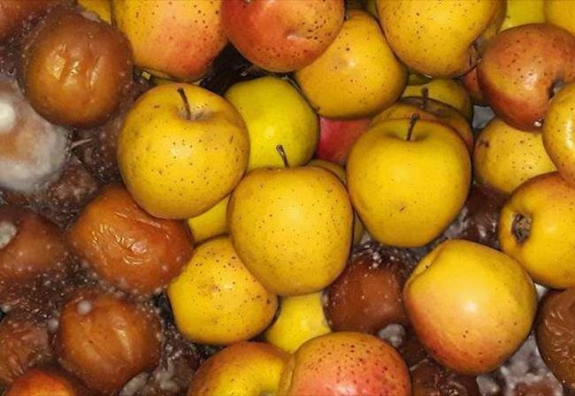 تعبیر خواب سیب | دیدن سیب و درخت سیب در خواب چه تعابیری دارد؟