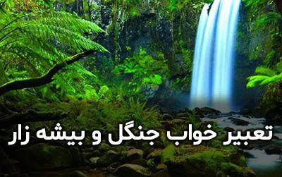 تعبیر خواب جنگل   دیدن خواب بیشه و جنگل چه تعابیری دارد؟