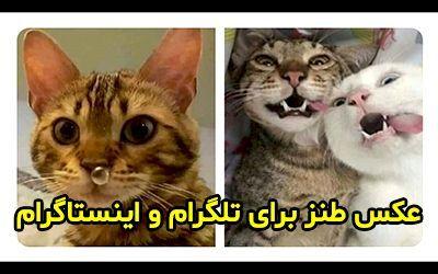 25 عکس طنز و خنده دار جدید برای تلگرام و اینستاگرام