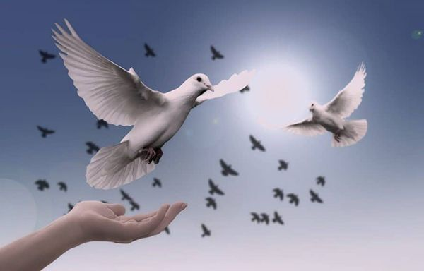 تعبیر خواب کبوتر   دیدن کبوتر در خواب چه تعابیری دارد؟