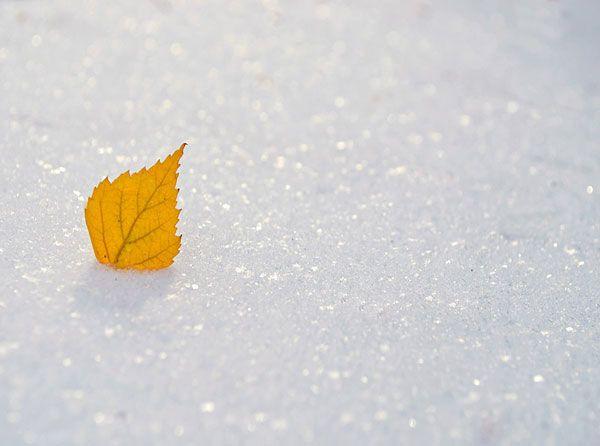 اشعار و جملات عاشقانه برای روزهای برفی + عکس پروفایل روزهای برفی