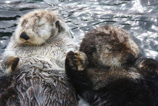 دانستنی های جالب در مورد حیوانات | 25 دانستنی جدید و کوتاه