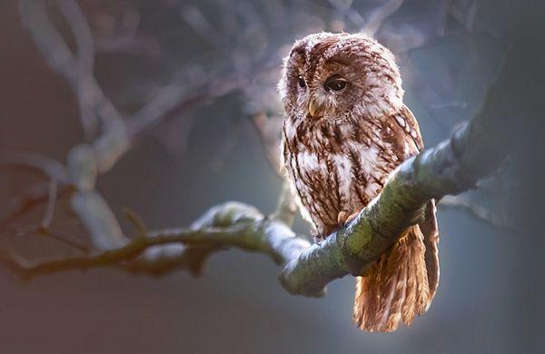 تعبیر خواب جغد | دیدن جغد در خواب چه تعابیری دارد؟