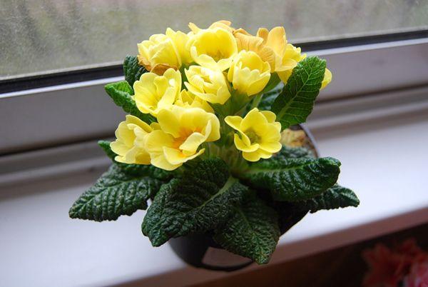 10 بهترین گل های آپارتمانی برای فصل زمستان