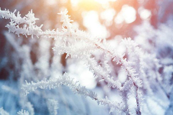 در فصل زمستان چه گل و گیاهی بکاریم و چگونه از آن مراقبت کنیم؟