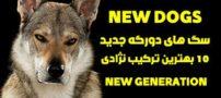 10 محبوب ترین سگ های دورگه | با نژاد جدید سگ ها آشنا شوید!