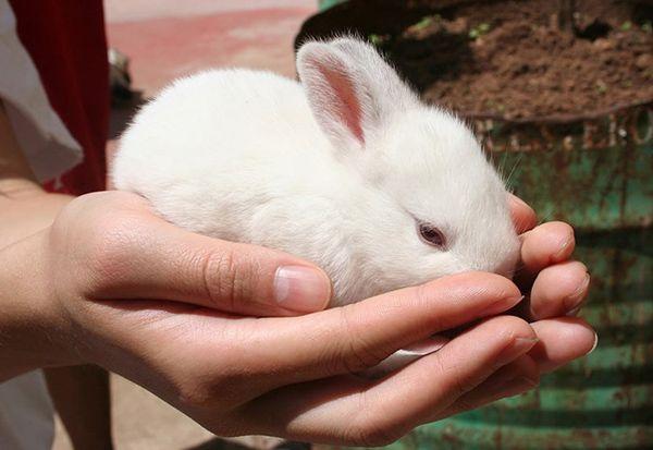 تعبیر خواب خرگوش   دیدن خرگوش در خواب چه تعابیری دارد؟