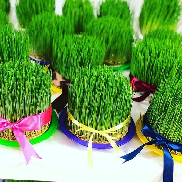 آموزش تزیین سبزه هفت سین 99 | جدیدترین مدل های سبزه آرایی 1399