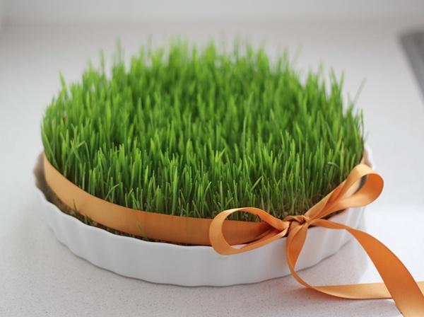 آموزش کاشت سبزه عید نوروز (کاشت بذر گندم، عدس و ماش)