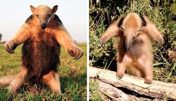 دانستنی های جالب درمورد حیوانات | از ویژگی های ظاهری تا طول عمر عجیب