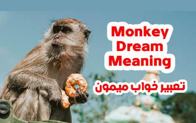 تعبیر خواب میمون | دیدن میمون در خواب چه تعابیری دارد؟