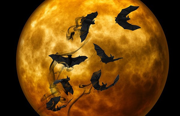 تعبیر خواب خفاش   دیدن خفاش در خواب چه تعابیری دارد؟