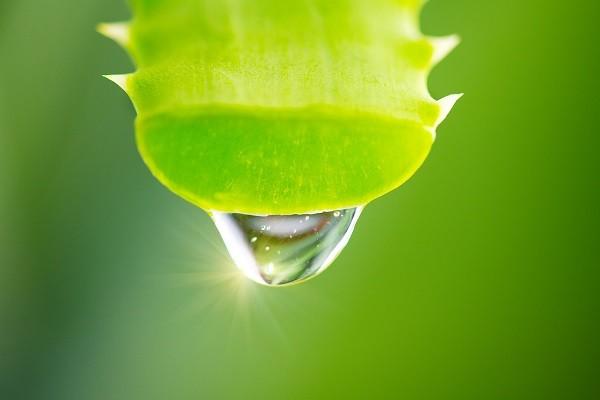 راه های درمان خارش نیش پشه (روش های کاربردی و آسان برای نیش حشرات)