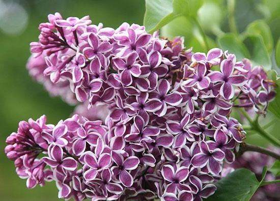طالع بینی گل مورد علاقه شما | رازهایی که گل ها در مورد شما می گویند!