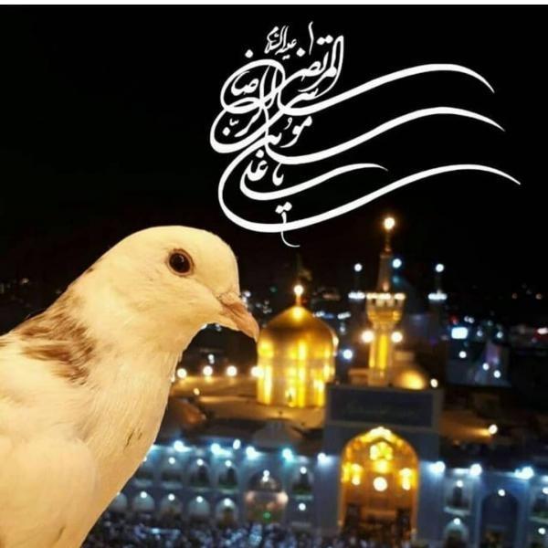 عکس پروفایل ولادت امام رضا (ع) 1399 | عکس ها و متن های جدید