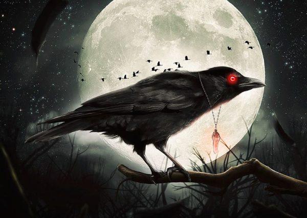تعبیر خواب کلاغ و کلاغ مرده | دیدن کلاغ در خواب چه تعابیری دارد؟