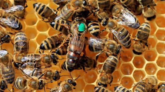 انواع تعبیر خواب زنبور (معنی دیدن زنبور در خواب چیست؟)
