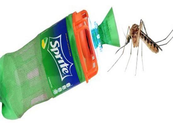 بهترین راه های خلاص شدن از مگس و پشه در خانه