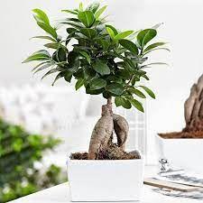 با خرید گل گیاهان گلدار دکور منزل خود را دگرگون کنید