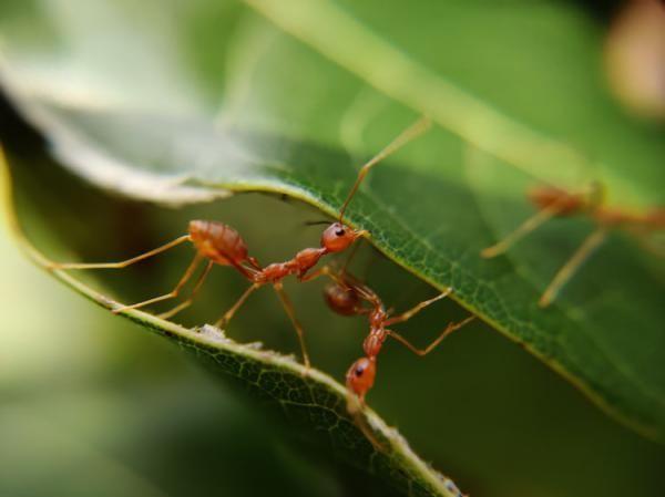 انواع تعبیر خواب مورچه | دیدن مورچه در خواب چه تعابیری دارد؟