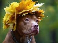 عکسهای خنده دار از حیوانات