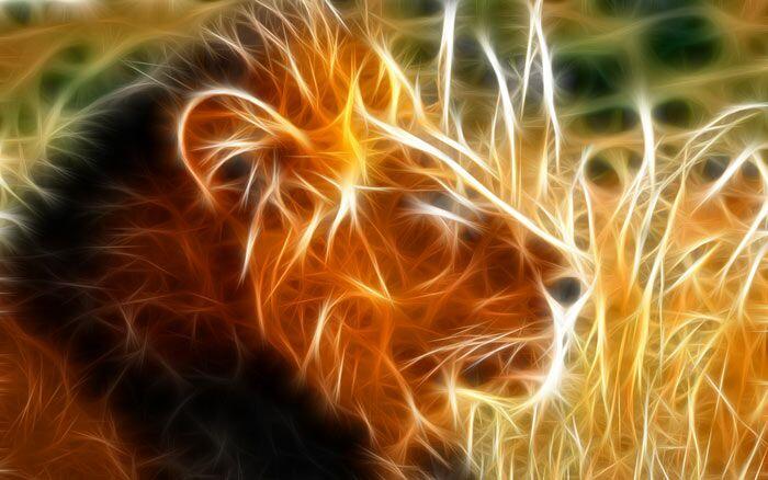 نمایش پست :تصاویر شگفت انگیر 3 بعدی از حیوانات