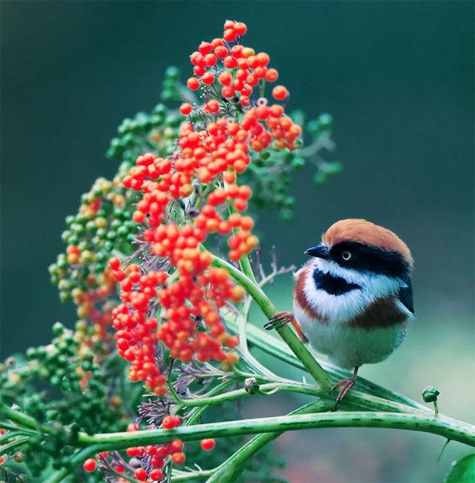 تصاویر بسیار زیبای پرندگان