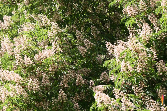 عکس های دیدنی از فصل بهار در کاخ سعدآباد