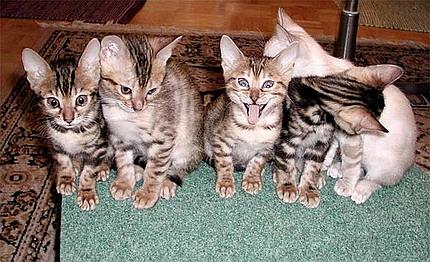 تصاویری دیدنی از گربه های ملوس اما فضول