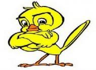 چه پرنده ای را دوست دارید؟ (طالع بینی)
