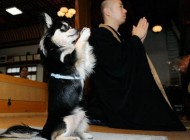 سوتی و سوژه های بسیار خنده دار از نوع ژاپنی
